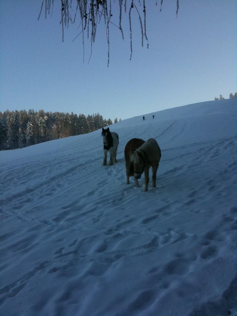 Cheyenne + Sölvi im Schnee