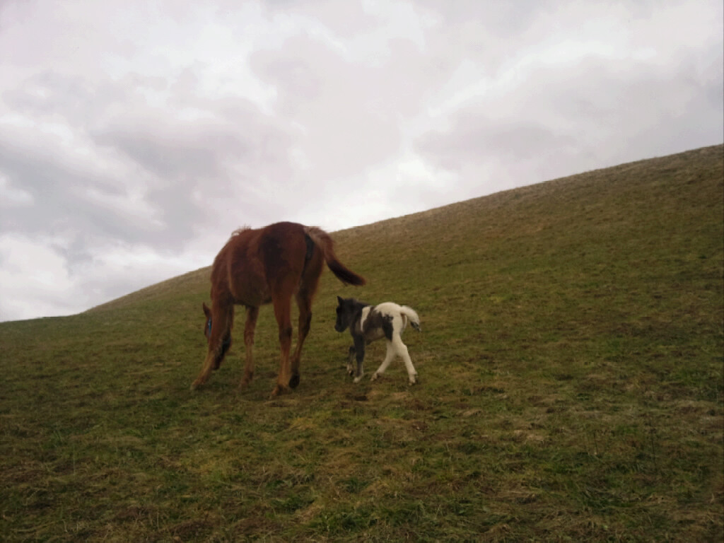 Amaya + Fin beim Spaziergang
