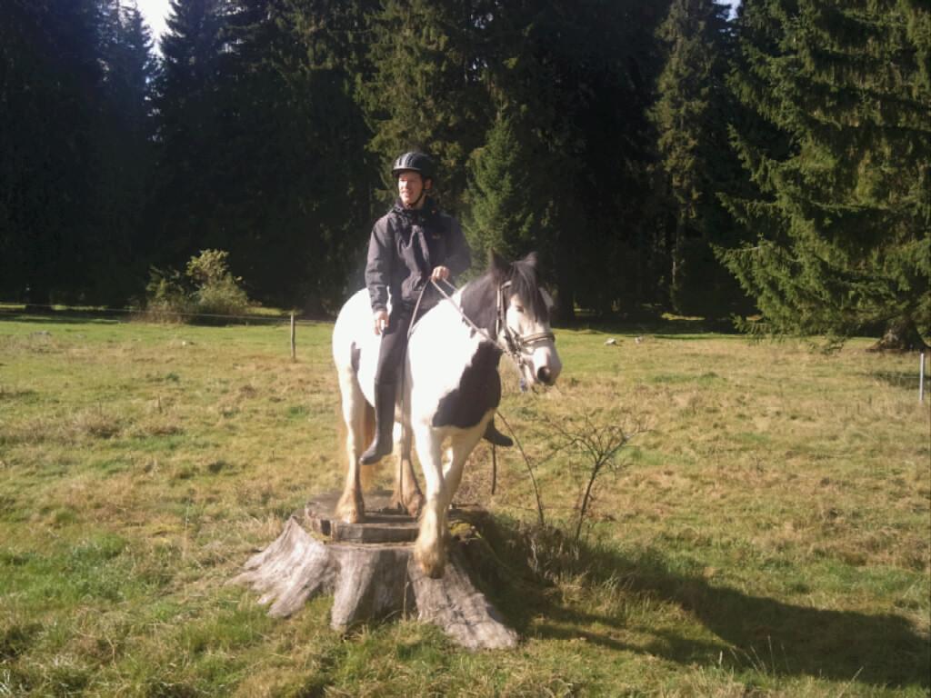 Cheyenne auf Baumstamm