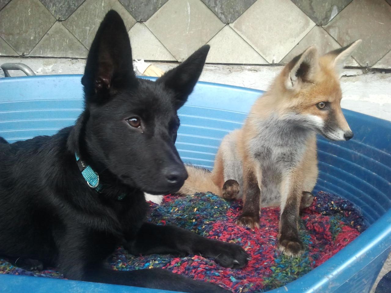 Zeus mit Fin Fuchs