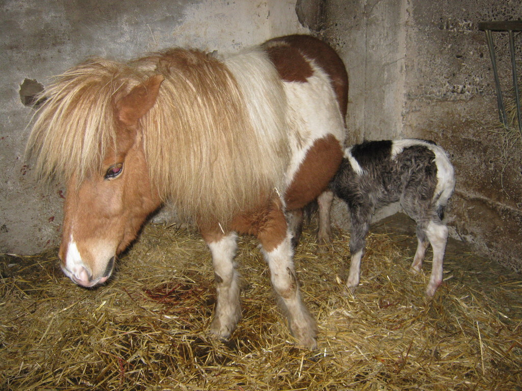 Loona hat am 8.4.2010 eine Tochter geboren