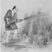 《江戸時代の栽培》