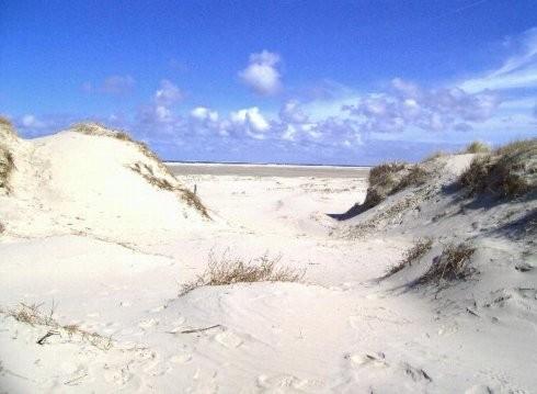 Blick auf die Dünen und den Strand von Borkum