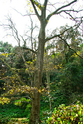 Jardí Botànic Històric de Barcelona