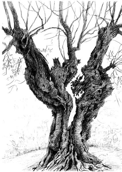 Il.lustració de: Josep Sabanés.