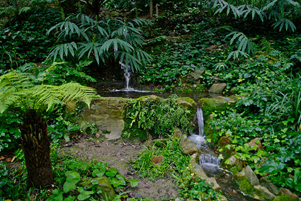 Actividades en el jard n bot nico hist rico amics del for Jardin botanico montjuic
