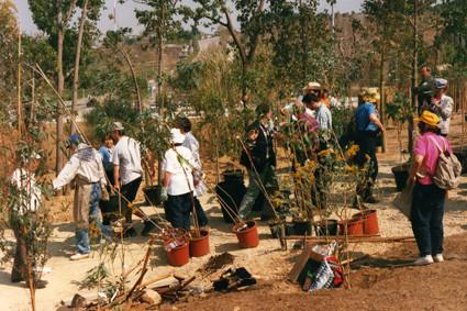¡Movilización! La gran plantada de eucaliptos (1999).