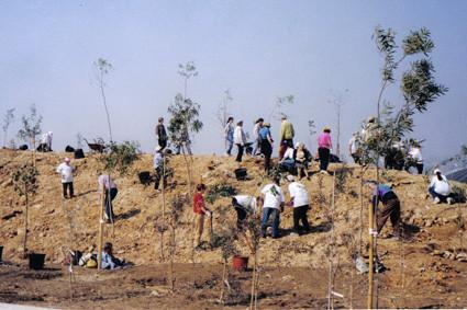 ¡Mobilització! La gran plantada d'eucaliptus (1999).