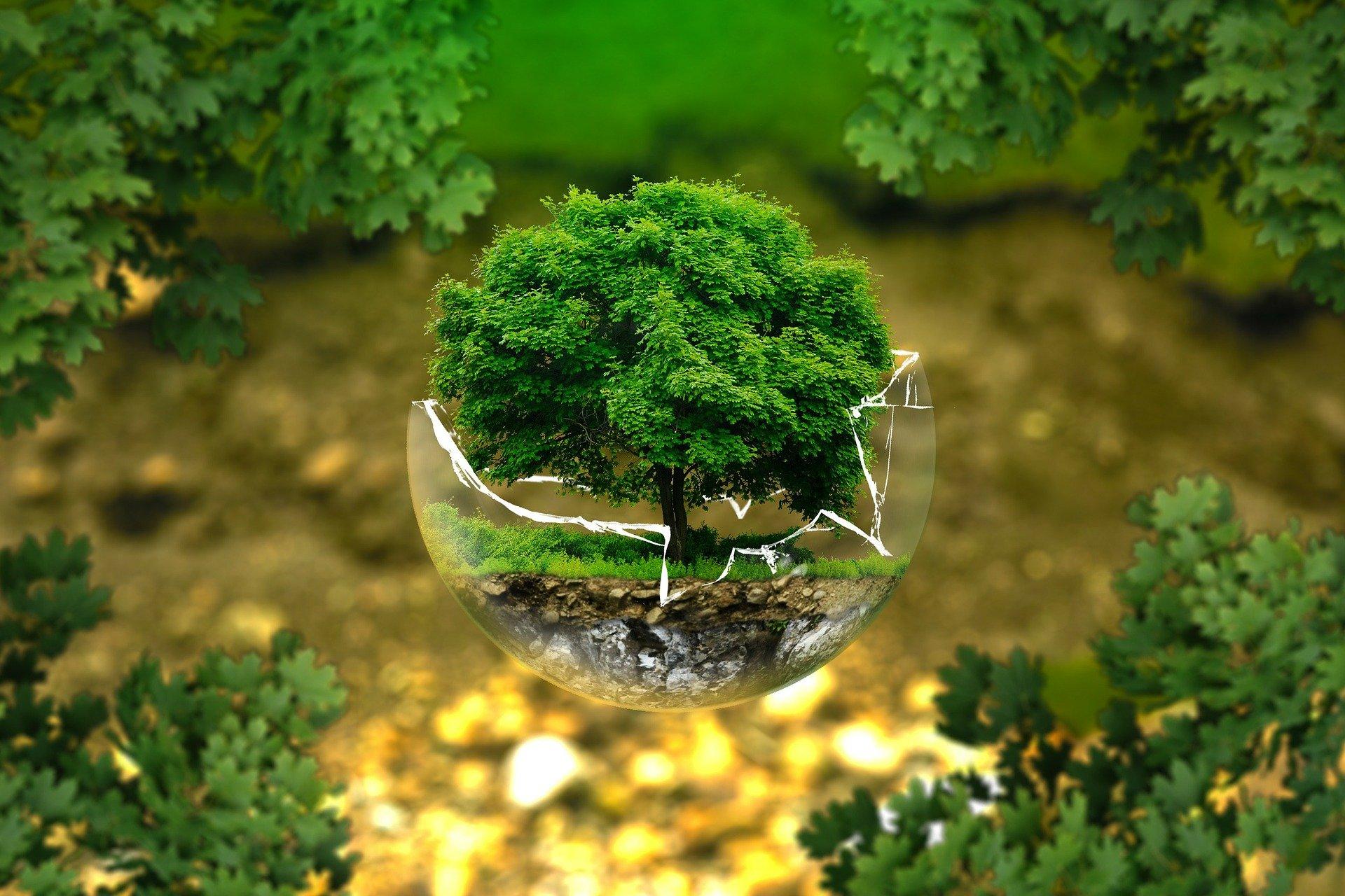 Umweltschutz: Vortrag und Preisverleihung