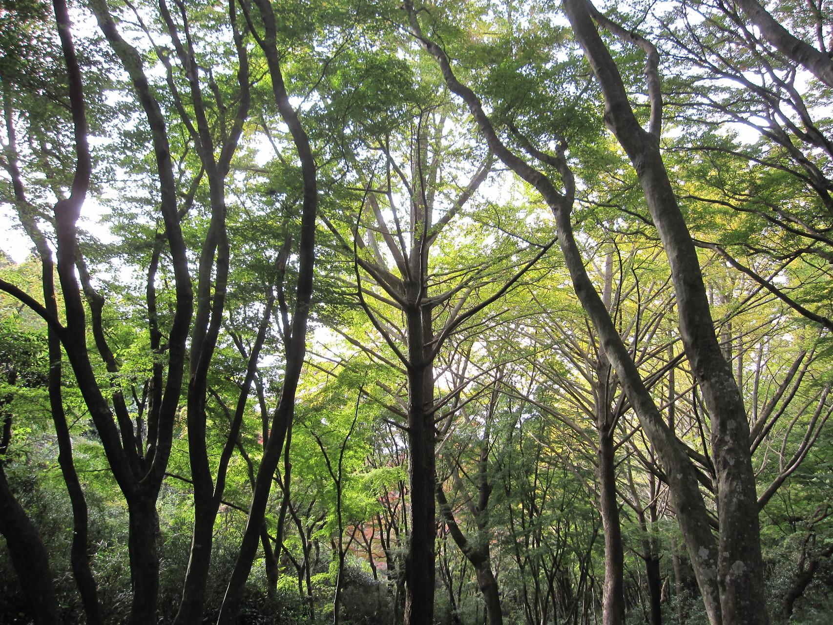 獅子舞の森林