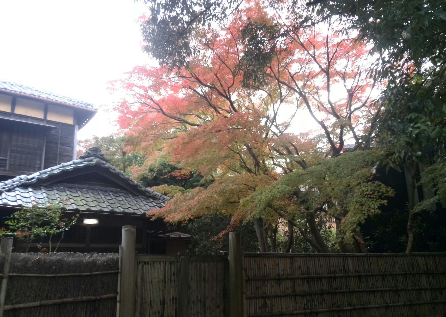 鎌倉宮近くの楓
