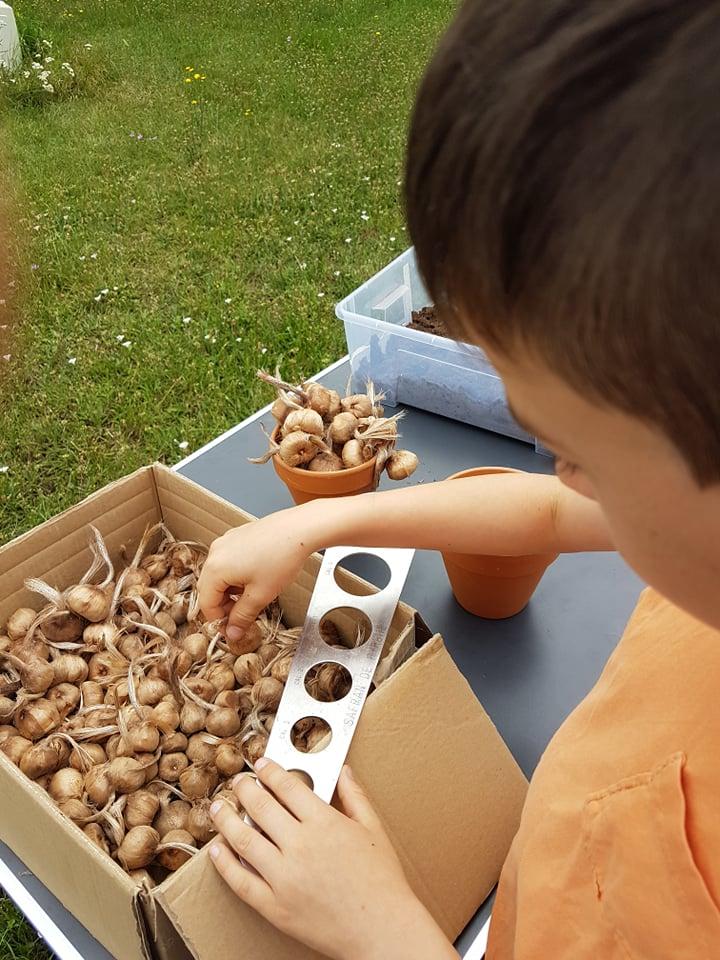 Manipulation des bulbes adaptée aux capacités de l'enfant