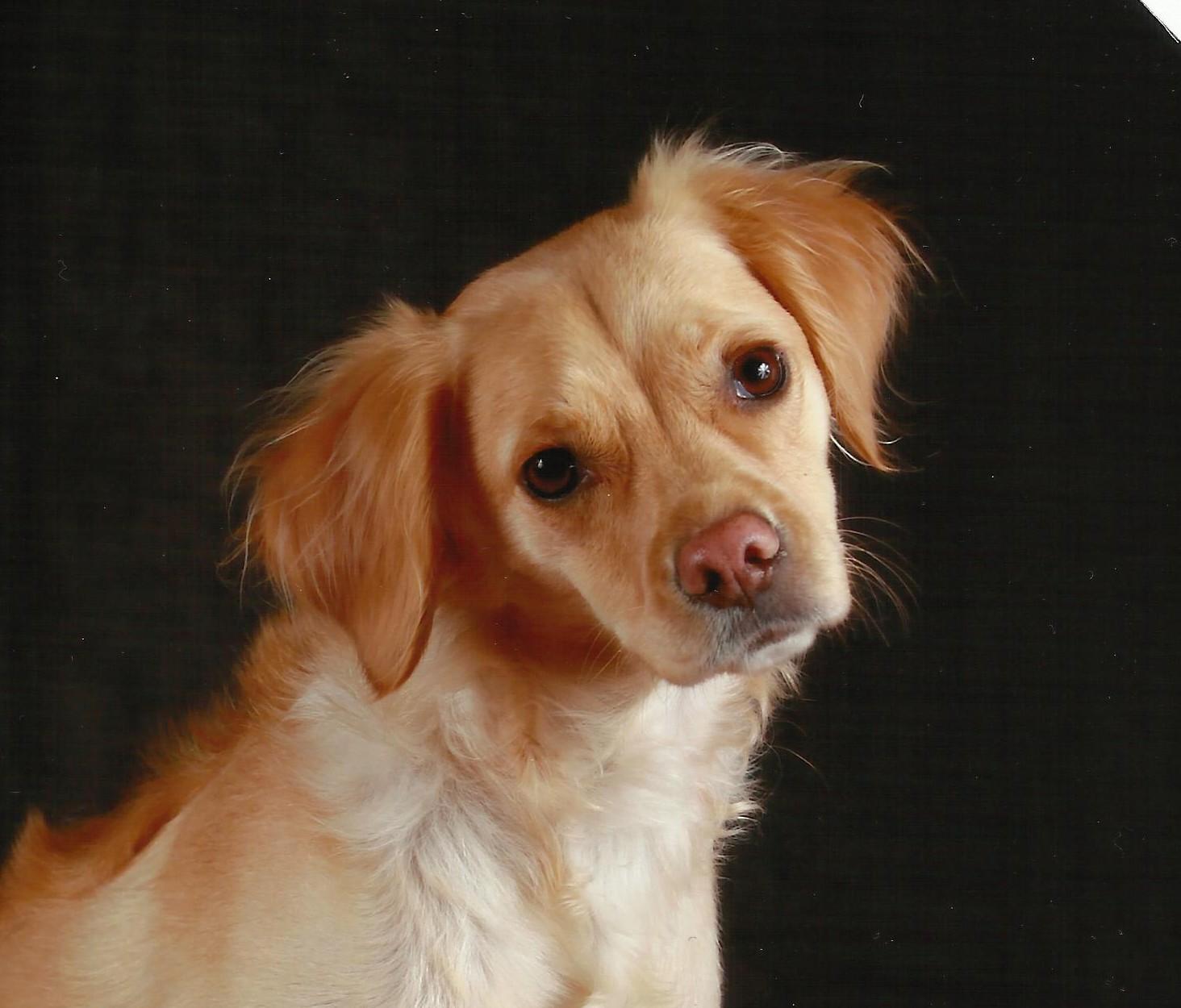 "mon chien ""Bouchon"""