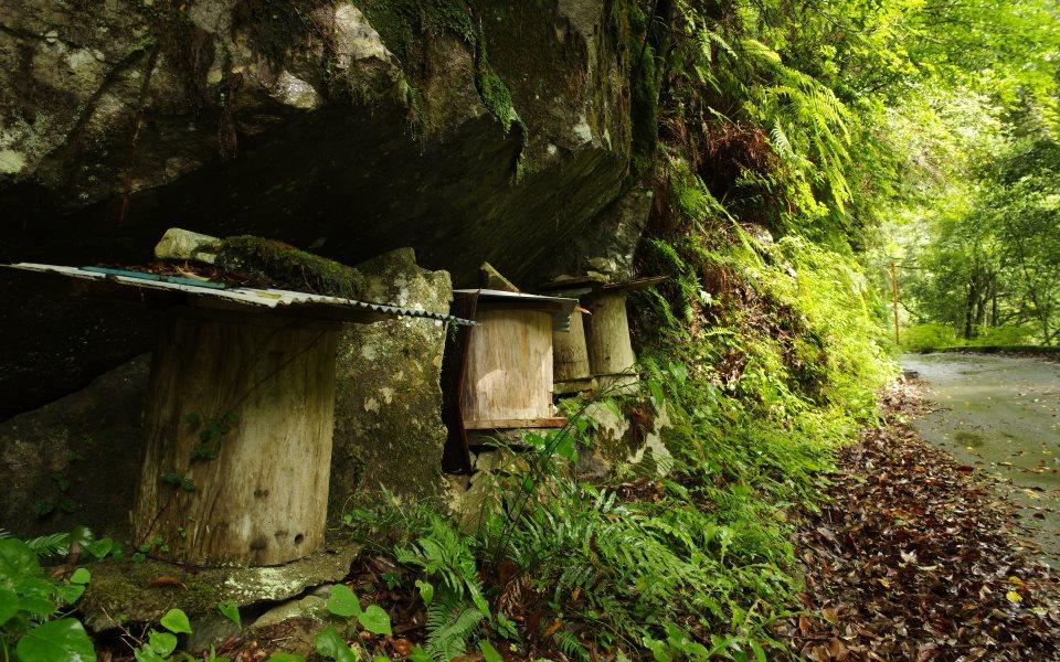 熊野地方に古くから伝わるゴーラによる養蜂