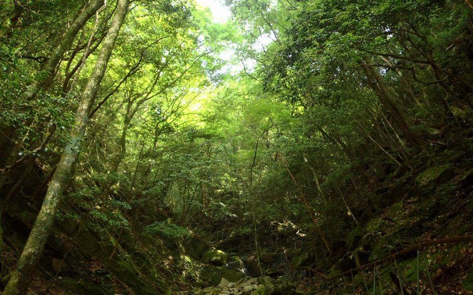 大森山天然生保存林