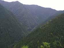 大森山保存林付近の急峻な地形の様子