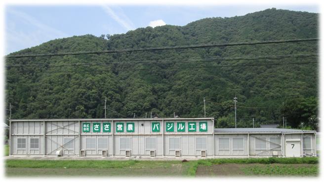 バジル工場