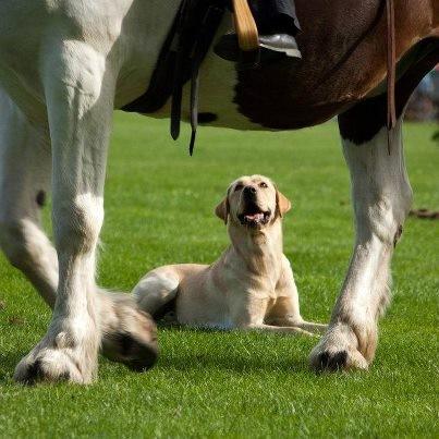 """Prüfung """"horse & dog"""" auf dem Landesbreitensportturnier in Bad Segeberg 2012"""