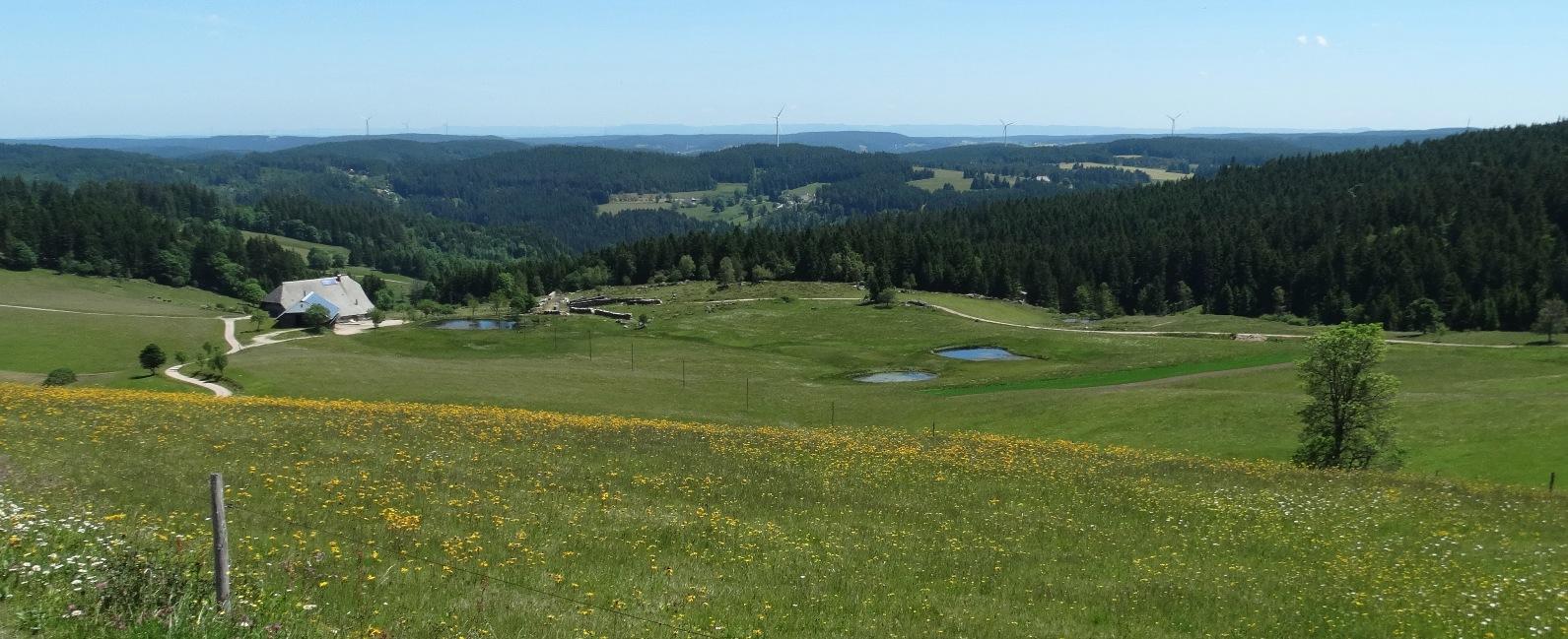 Am Rohrhardsberg, Foto Bernhard Scherer