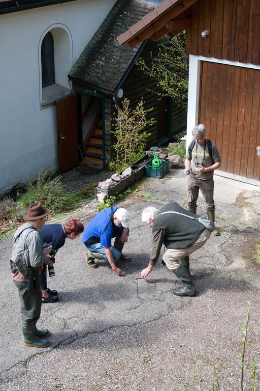 Schlangen-Exkursion bei Vöhrenbach