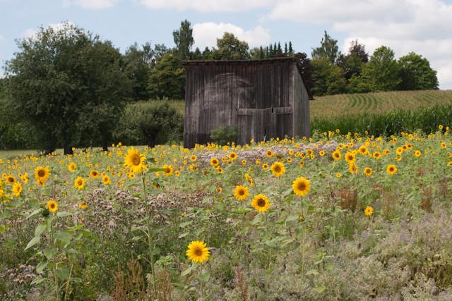 alte Feldscheune mit Obstgarten