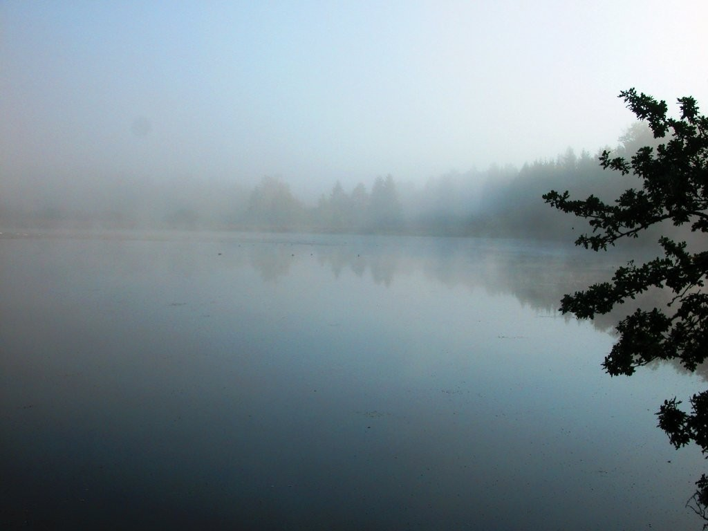 Nebel am Unterhölzer Weiher