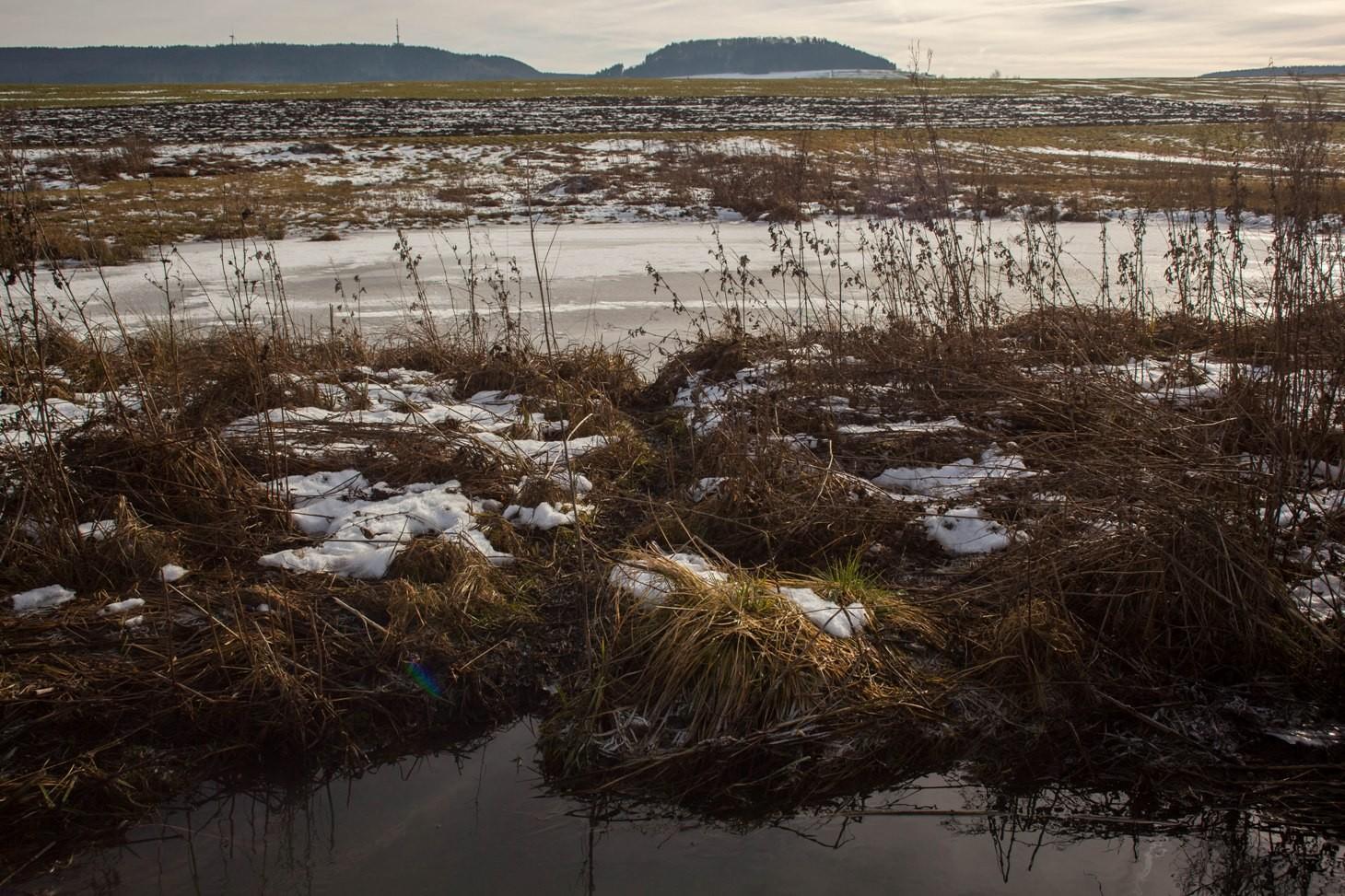 Biberpfad vom bestehenden Teich in den neuen Staubereich