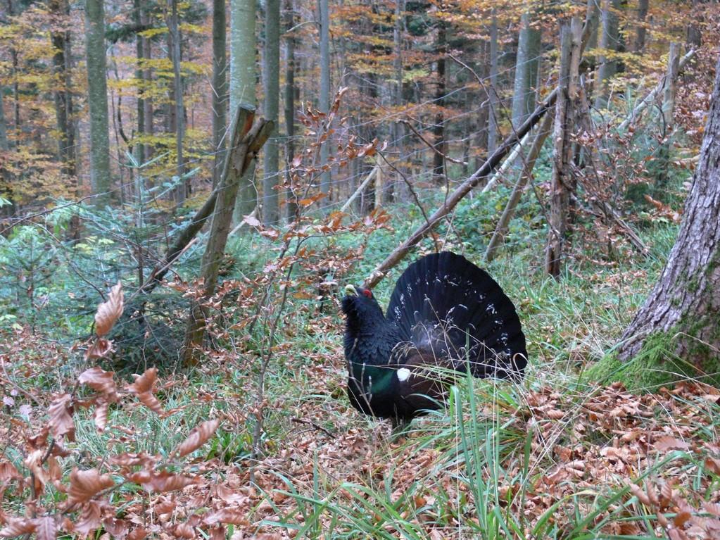 Todesfalle Zaun, leider immer noch ein Thema, Foto: Bernhard Scherer (C)