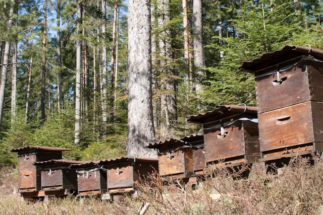 Platzhalter-Bild für viele kommende Wildbienen-Fotos