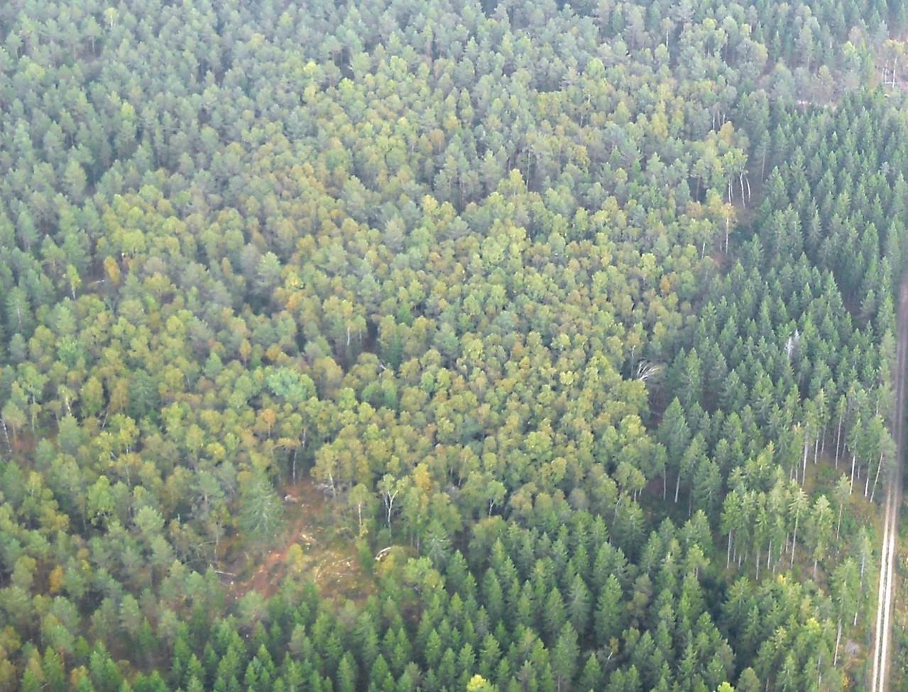Birkenfläche Ausschnitt, Luftbild, Fotograf: Jörg Maier (C)