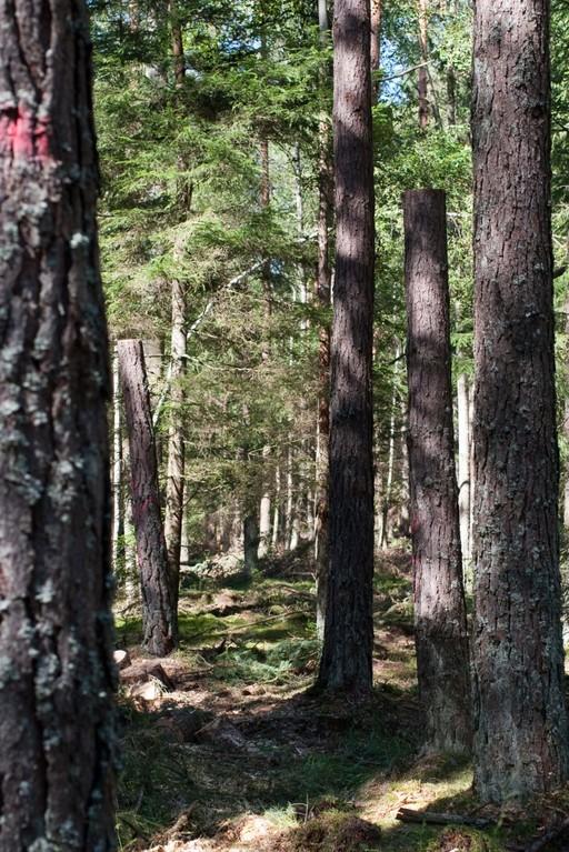 Totholzanreicherung