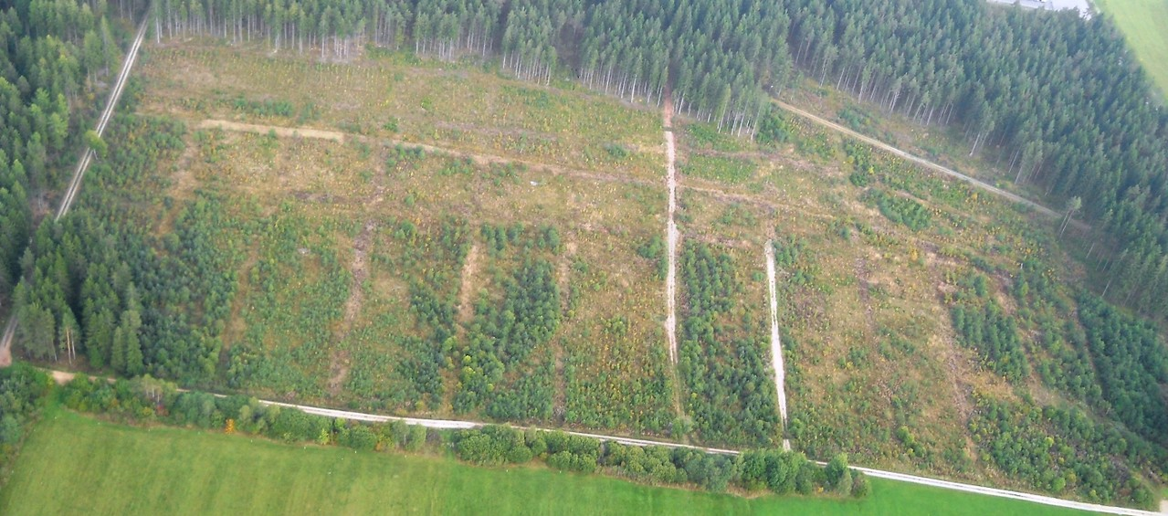 Eichenfläche (Baumpieper-Lebensraum) Luftbild, Fotograf: Jörg Maier (C)