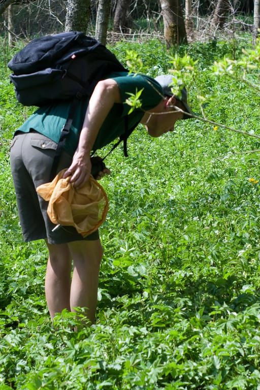 Schmetterlings-Exkursion ins Badloch bei Königsfeld