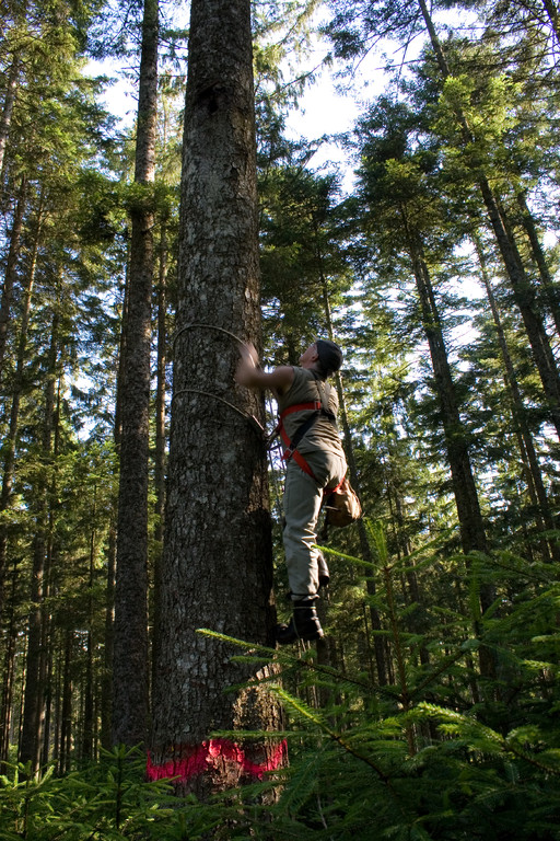 30 Jahre Höhlenbaum-Markierung durch den NABU