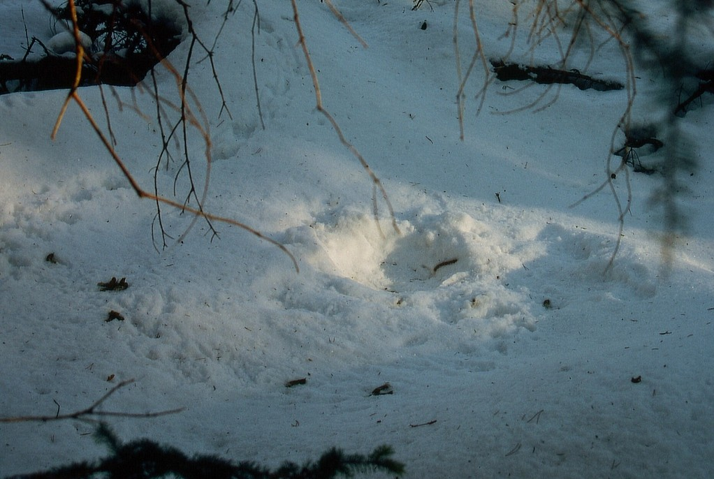 Huderstelle im Schnee, Foto: Bernhard Scherer (C)