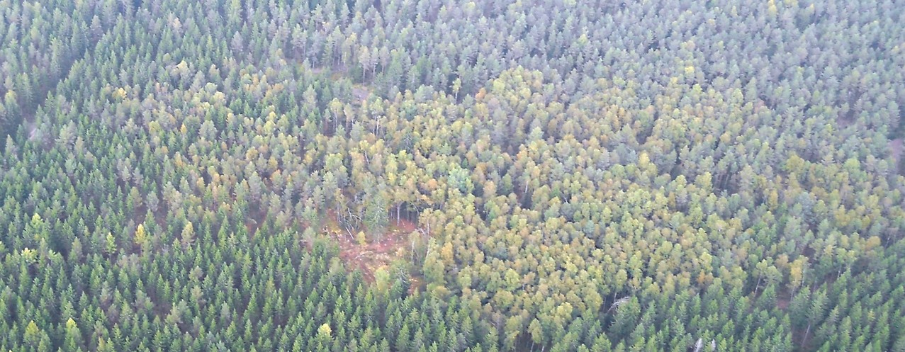 NABU-Fläche mit hohem Birkenanteil, Luftbild, Fotograf: Jörg Maier (C)