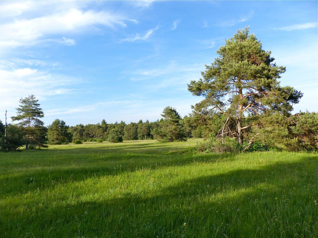 "NSG ""Königsbrunner Heide"""