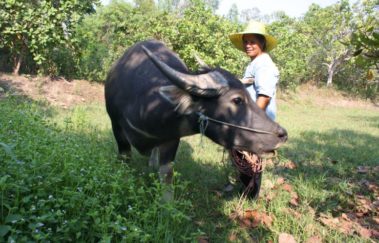 Rijst uit Thailand
