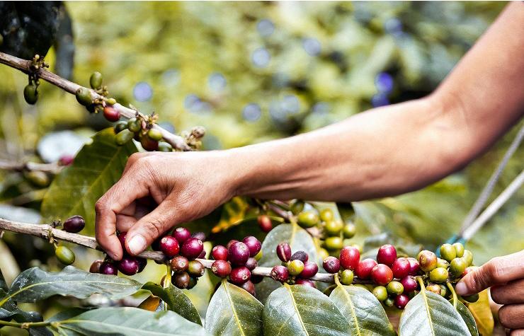 Koffie uit Latijns-Amerika, Afrika en Azië