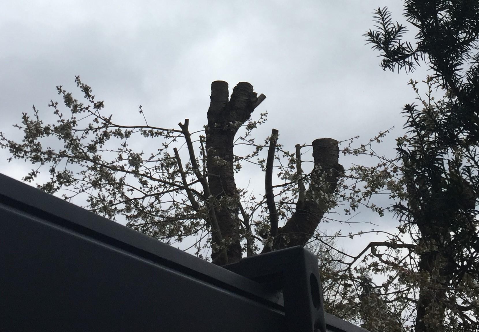 geköpfter Baum bei Nachbarn, keiner bleibt verschont