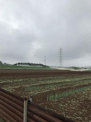 ここは、「大規模農地改良事業」として行ったところだそうです。草のにおいがどこか懐かしいです。