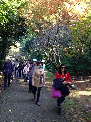 ここが、鶴ヶ峰かと驚くほどの散策路、帷子川親水緑道がありました!