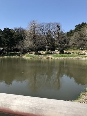 平泉の「毛越寺」に全体の雰囲気が似ています。
