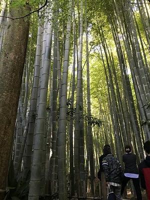 竹は太くて長~い・・・
