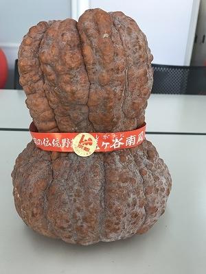 先生が連れてきたモデルです。「鹿ヶ谷南瓜」(ししがたにかぼちゃ)という京都でしか出来ない南瓜です(^^♪