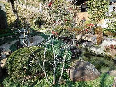 梅が咲き始めています(^^♪