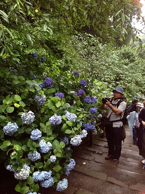 北鎌倉から7,8分歩くと、紫陽花寺で有名な「明月院」へ