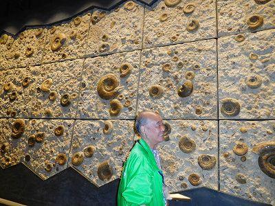 イギリスから購入したオーム貝の化石です。大きな壁一面本物とのこと。説明の方が、今では買えませんよ、バブルの時だったから・・・と、詳細を明かしてくれました(*^^*)