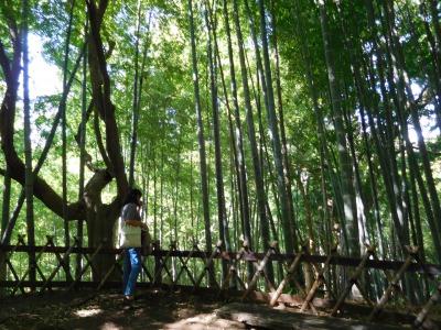 この日の温度は30度近かったので・・・・竹林を通るときは大変爽やかで涼しかったです(^^♪