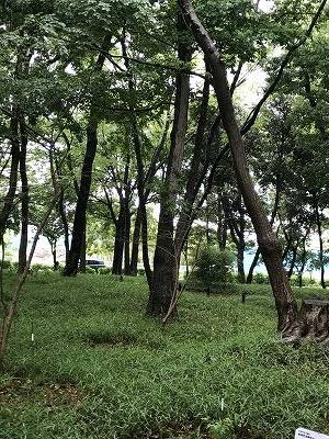 市営地下鉄「立場駅」から、小雨の中を出発しました。暫く歩くと広大な農地が目の前に広がってきました。横浜にもまだこんな風景がありました。